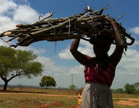 african woman carrying wood on her head