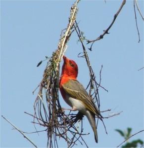Maduma Boma conservancy, Maduma Boma game reserve